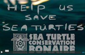 Help ons met het beschermen van zeeschildpadden op Bonaire